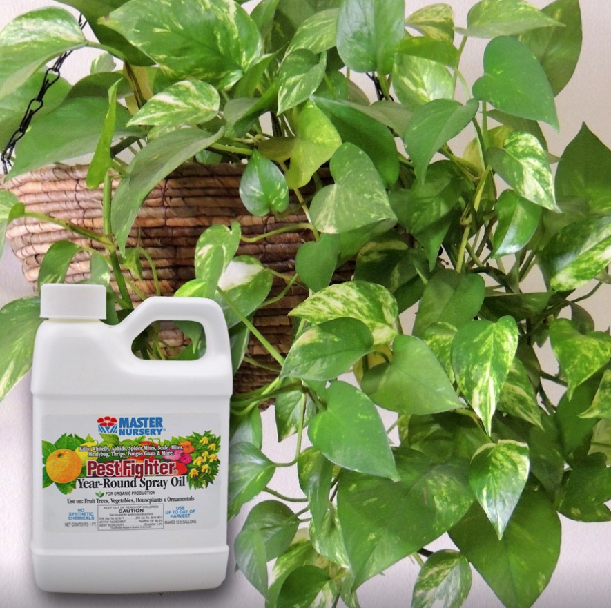 Master Nursery Pest Fighter Year Round Spray Oil